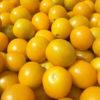 passata-gialla-1